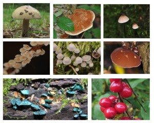 Fungus and Berries