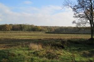 Grafton Wood Wheat Fields 002