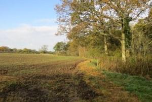 Grafton Wood Wheat Fields 010