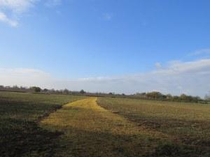 Grafton Wood Wheat Fields 011