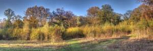 orchard gladelr
