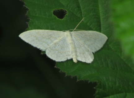 Small White Wave