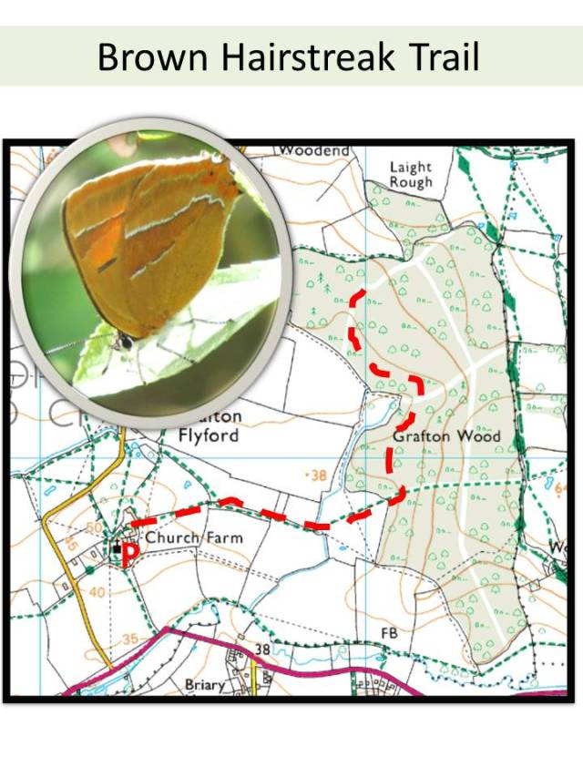BHs Trail